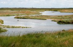 De Slufter, Island of Texel the Netherlands