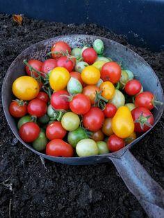 Koivikon Katveessa: Tiistain puutarha puuhastelut