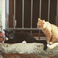 Miei vicini di casa  #cat #cats #catsofinstagram #catstagram #gato #gatosdeinstagram #gatto #gattidiinstagram #gattonero #blackcat #orangecat #miau #instavenice #instavenezia #igervenezia #igersvenezia #venice #venedig #venezia #veneziacity #veneziagram #venezianity #veneziaunica #veneziadavivere #veneziaitalia #ihavethisthingforwalls #nothingisordinary #nothingisordinary_ #ihavethisthingforcats by gabrylela