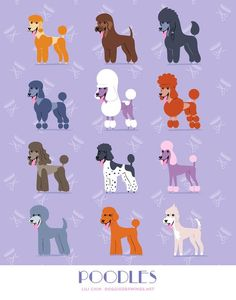 "Obtain great recommendations on ""poodle dogs"". They are available for you on our site. Poodle Grooming, Dog Grooming, Cute Puppies, Cute Dogs, Poodle Puppies, Yorkie Poodle, Lab Puppies, Poodle Haircut Styles, Poodle Cuts"