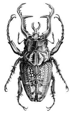 Antique Illustration, Ink Illustrations, Illustration Art, Beetle Tattoo, Bug Tattoo, Desenhos Old School, Gravure Illustration, Stippling Art, Surreal Artwork