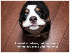 I meant to behave but.....