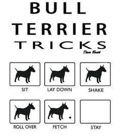 Oh yes for Bull Terrier Tricks! Haha (Photo from http://bullterrierlove.tumblr.com/post/46707886778)