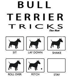 Oh yes for Bull Terrier Tricks! Haha (Photo from http://bullterrierlove.tumblr.com/post/46707886778)