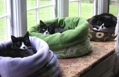These cats certainly look cozy, and what better spot than right on the window…