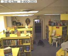 Willard Library ghost - still capture of streaming footage of security camera (See creepy translucent creature crawling on floor of children's reading room?) Live cams here! http://www.courierpress.com/libraryghost/