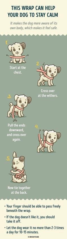 Dog Training - CLICK THE PIC for Lots of Dog Care and Training Ideas. #doglovers #puppytraining