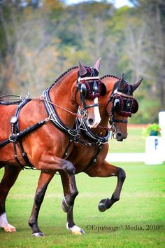 race horse blinders - Google Search