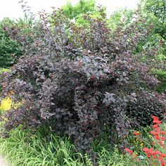Hydrangea Petiolaris, Jazz Wedding, Gras, Native Plants, Devil, Astrantia, Harvest Season, Wicker, Planting
