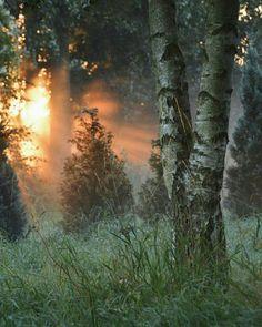 На восходе свет врывается в лесную чащу