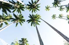 "If each day is a ""gift"", I'd like to know where I can return Mondays  @nakdfashion #summer #travel #trees #spot #fashion #picture #nakdfashion #decor #sweet #factor #place #escape #beautiful #decoration #Best #vacay #pretty #paradise #amazing #wow #cute #palm #sky #palms #awesome #bali #tree #cool #sun #vacation #FF #tagforlikes #random"