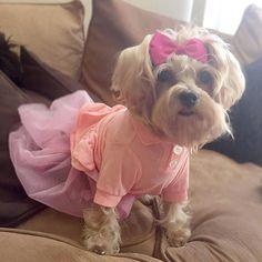 Lovely cute dress