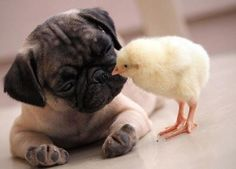 Opposites attract <3