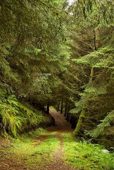54 ideas for nature photography forest wood peace Forest Path, Forest Road, Tree Forest, Forest Trail, Landscape Photography, Nature Photography, Walk In The Woods, Parcs, Nature Pictures