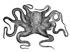 Vintage Clip Art - Octopus from *The Graphics Fairy LLC*: (print for bathroom) Graphics Fairy, Free Graphics, Vintage Abbildungen, Vintage Prints, Vintage Clip Art, Vintage Pictures, Vintage Images, Stencils, Octopus Art