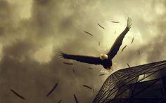 Foto Aguila Americana Volando – Calidad Alta 1920*1200 – Fondo de ...