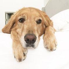 www.dogs-likes.com   .                 .  WoOOF!!  *:) // #funnydogpictures, #perros, #typeso dogs, #catsanddogs, #dogtype,#dogbreeds, #kindsofdogs, #funnydogvideos, #mediumsizeddogs, #bestdogbreeds, #dangerousdogs, #whattypeofdogshouldiget, #dog, #dogs, #perros, #mascotas, #pets, #puppy, #puppies, #razasdeperrospequeños #chiens #hunde #犬 #собаки