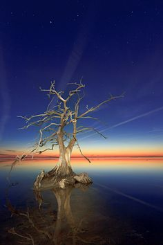 ~~Cypress Sunset ~ Cypress Tree, Currituck Sound, Outer Banks, North Carolina by Dan Waters~~