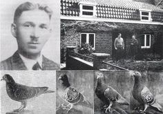 ALOIS STICKELBAUT. The Legends Of Pigeons Racing - Racing Pigeons - welcome to…