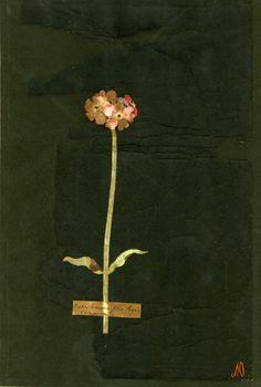 Mary Delany (1700 - 1788)