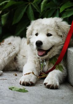 When I am having a bad day looking at puppies just makes things a little better. :)