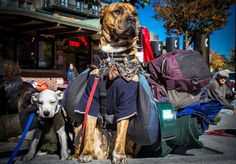 What Everyone Misses When It Comes To The Homeless And Dogs Homeless Dogs, Homeless People, Helping The Homeless, Homeless Care Package, Us Vets, Veterinary Care, Good Cause, Dog Behavior, Animal Rescue