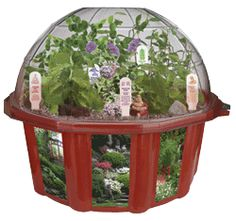 Grow your own little piece of paradise with the brand new Bonsai Village. Plants in the Bonsai Village start sprouting in less than a week and live for years! This exciting dome terrarium contains five kinds of trees and shrubs-Elm, Lilac, Pea Shrub, Beauty Bush, and Butterfly Bush-enough variety that the basic techniques of bonsai can be learned.