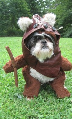 Ewok Star Wars Dog Costume #cosplay #funny--I know what dominos going to be for Halloween!!! Liam can be yoda =)