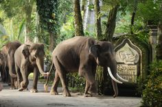 Elephant Safari Park in Taro, just outside of Ubud, where you can interact with, bathe, and ride the elephants. THIS IS A THING?!?!