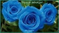 ***DIOS TE BENDIGA*** - Flores