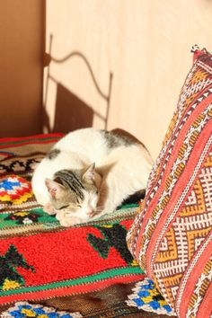 Moroccan Cat in the sunshine.