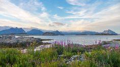 Lofoten-ile Moskenes, Fjord Norvège