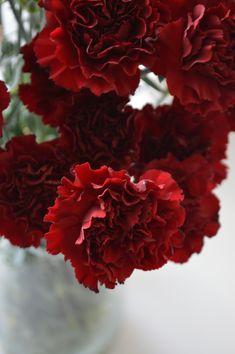 Carnations, Vegetables, Rose, Flowers, Plants, Pink, Vegetable Recipes, Plant, Roses