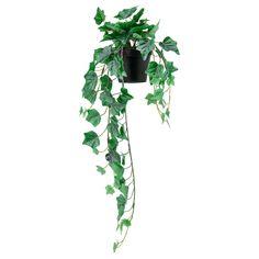 IKEA - FEJKA, Planta artificial, int/ext/colgante Hiedra, Tiene la misma frescura que una planta natural y conserva su belleza año tras año. Adecuado para usar tanto en el interior como en el exterior. Ivy Plants, Faux Plants, Water Plants, Potted Plants, Faux Succulents, Plant Pots, Exterior Gris, Interior Exterior, Ivy Plant Indoor