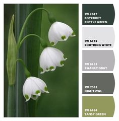 Snow drop (green, grey, black, white) color pallette from Let's Chip It! by Sherwin Williams