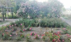 Plants, Pictures, Photos, Photo Illustration, Plant, Resim, Planting, Planets, Clip Art