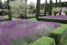jardin d'ornement à la française, lavande, buis taillés en cône et arbres