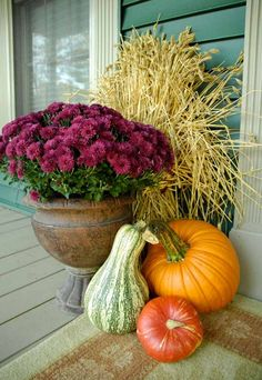 Festive Thanksgiving front porch decor: pumpkins, gourd, plum colored mums in stone urn, sheaf of wheat.