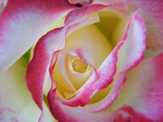 Wake Me Because This Rose Must Be A Dream by Mary Sedivy.