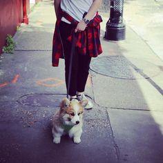 """Dat dawg ain't got no legs!"" #fluffycorgipuppy #fluffycorgi #corgilove #corgisploot #corgi #corgis_of_instagram #corgination #pembrokewelshcorgi #corgipuppy #corgiplanet #pentu #koira #koiranpentu #puppy #fluffy #cute #small #finnish #dog #corgibaby #corgisofinstagram #nola #frenchquarter by oskisploots"