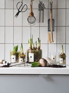 Spring Bulbs, Home Candles, Upcycling Ideas, Jo Malone, Planting Bulbs, Plant Pots, Glass Vessel, Scented Candles, Green And Grey