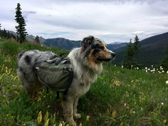 Thru-Hiking With a Dog – Dogs That Hike