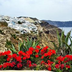Happy Sunday loves - with the beauty #Greece  ------ Um Domingo Feliz pra todos!  #abelezanasceunagrecia #chegoukorres @korresbr @fhits
