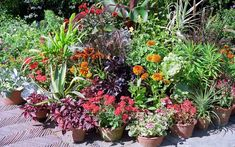 Shade Plants Container, Container Gardening, Organic Gardening Tips, Different Plants, Garden Structures, Colorful Garden, Companion Planting, Planting Flowers, Flowering Plants