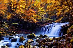 蓼科大滝の紅葉