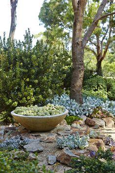 Australian Garden Design, Australian Native Garden, Dry Garden, Olive Garden, Bush Garden, Back Gardens, Outdoor Gardens, Small Gardens, Mediterranean Garden Design