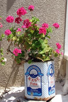 Pink Geraniums in a Feta Tin, Naxos Island, Cyclades, Greece-Lots of flowers in Nymfes all growing out of old Feta tins - we are good at re-cycling here - it's a natural way of life for the villagers Mykonos, Greek Decor, Pink Geranium, Athens Greece, Naxos Greece, To Infinity And Beyond, Greek Islands, Beach Fun, Beautiful Islands