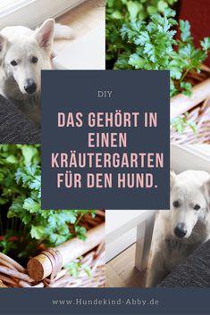 #kleingarten #kräutergarten #kräuter #garten #heilkräuter #hund #diy