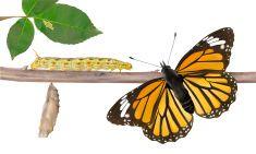 Life Cycle Of Butterflies - Vector illustration vector art illustration