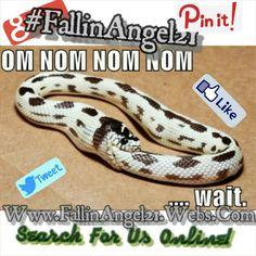 #FallinAngel21 ~Fallin' Angel Records~ #Instagram #QtQueTek #Twitter @NotoriousSecret @afallinangel #afallinangel #RPMI Regular People Make It!!
